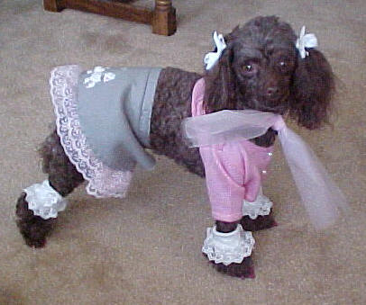 Poodle in a poodle skirt